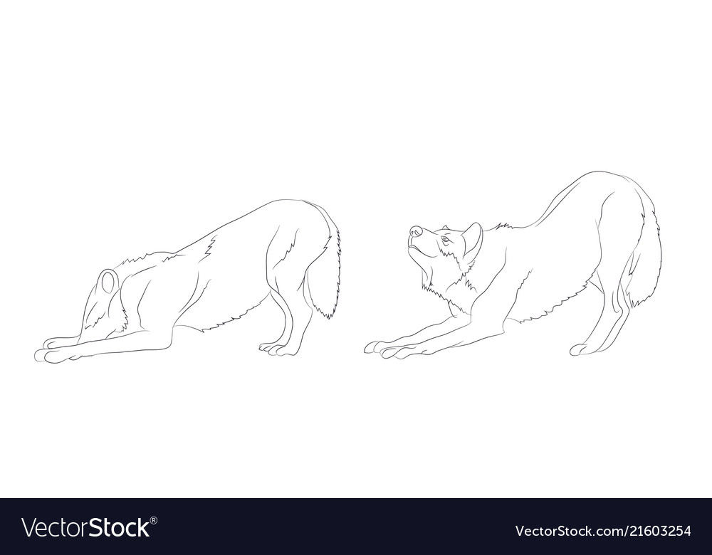 Wolf stands lines
