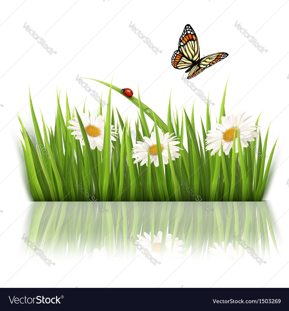 Nature grass background