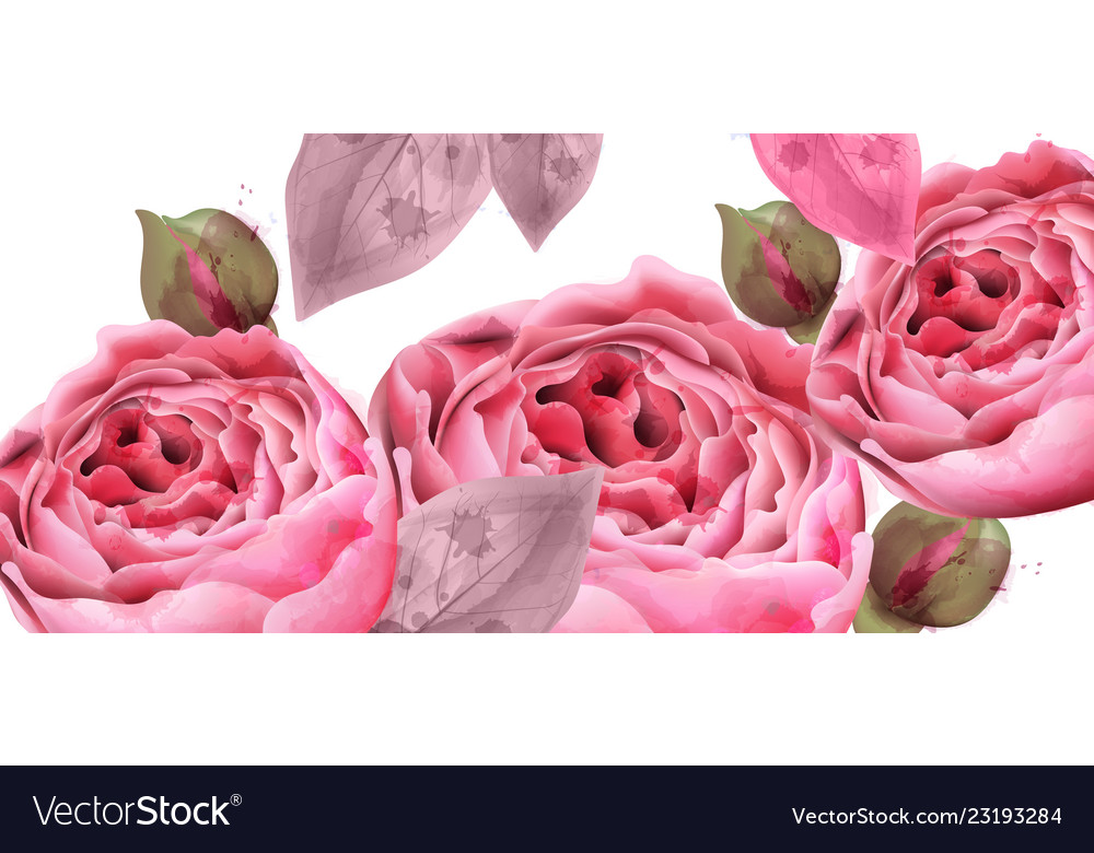 Pink roses watercolor background