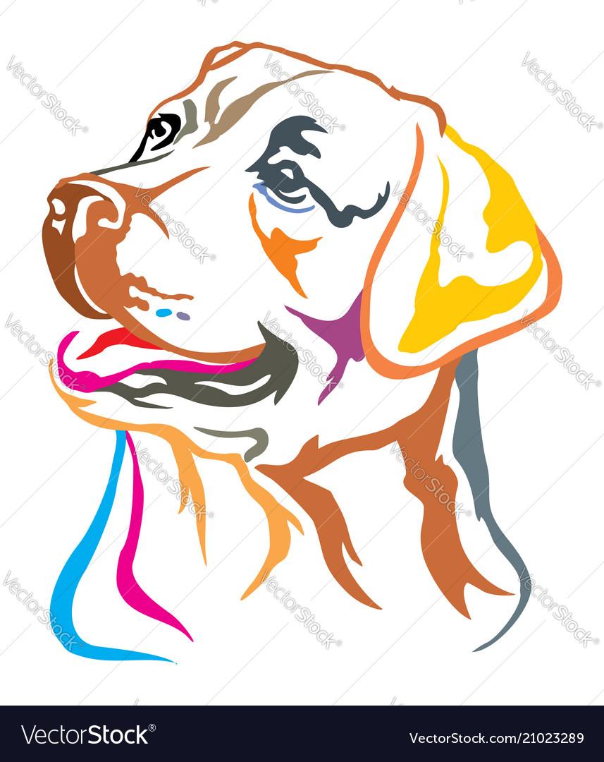 Colorful decorative portrait of labrador