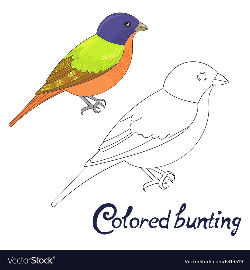 Educational Game Coloring Book Bird Vector Image