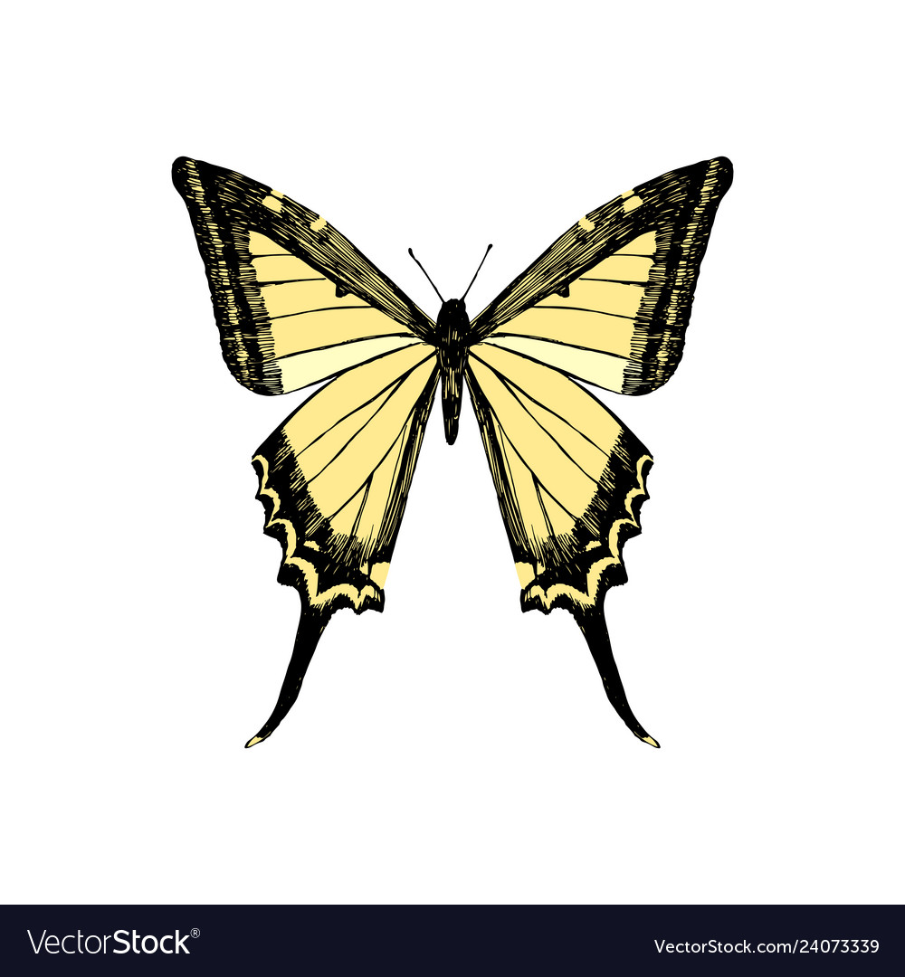 Hand drawn yellow swallowtail butterfly