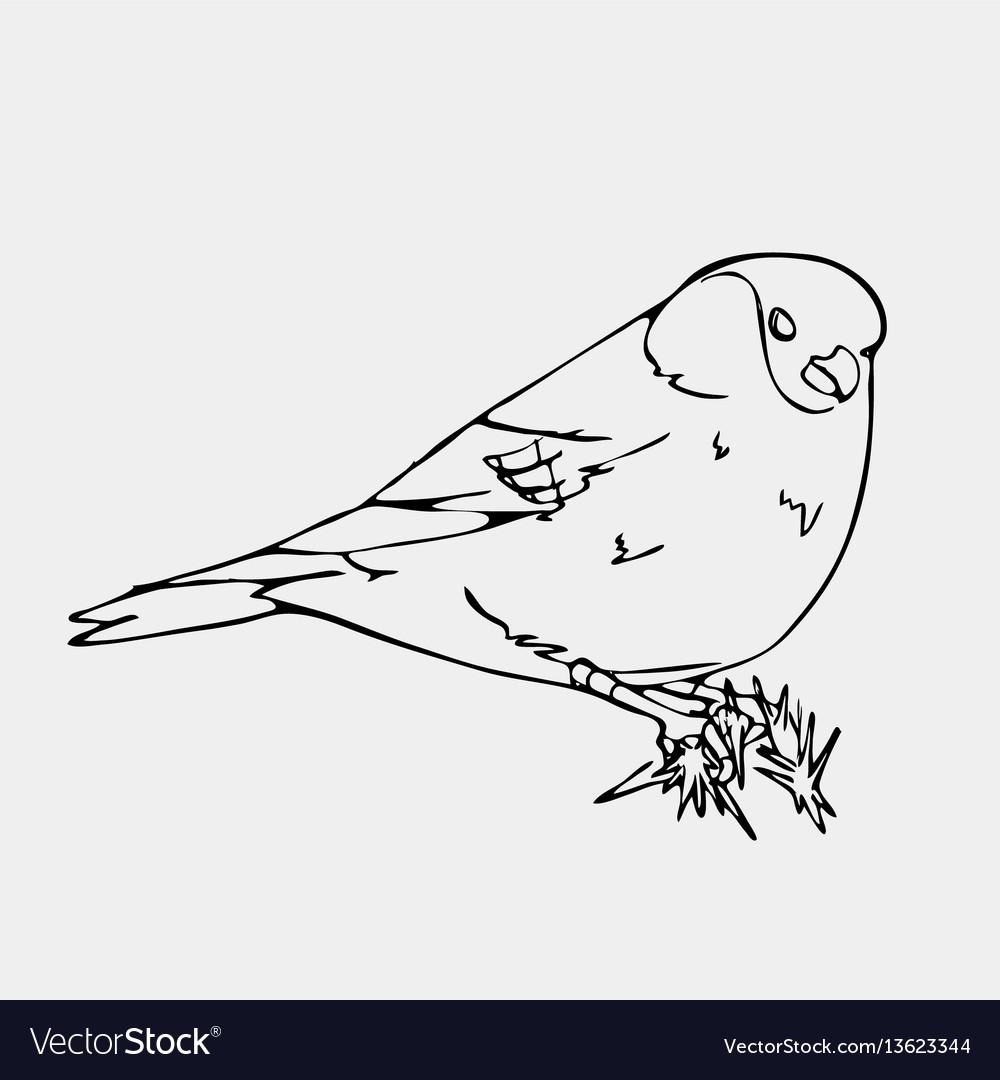 Hand-drawn pencil graphics small bird engraving vector image