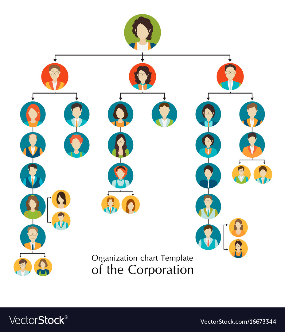 Organizational Chart Template Of The Corporation Vector Image