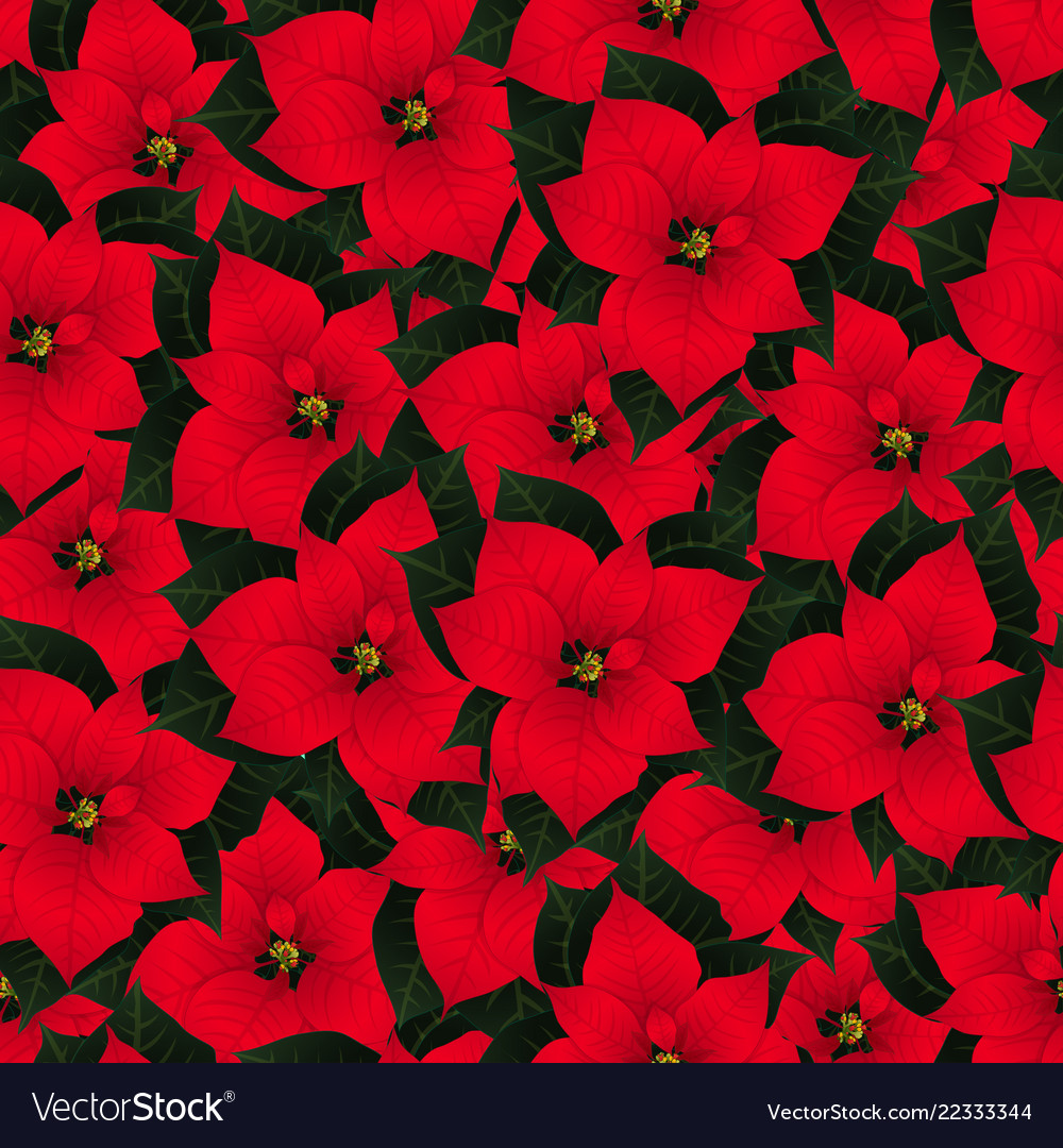 Red poinsettia seamless christmas background