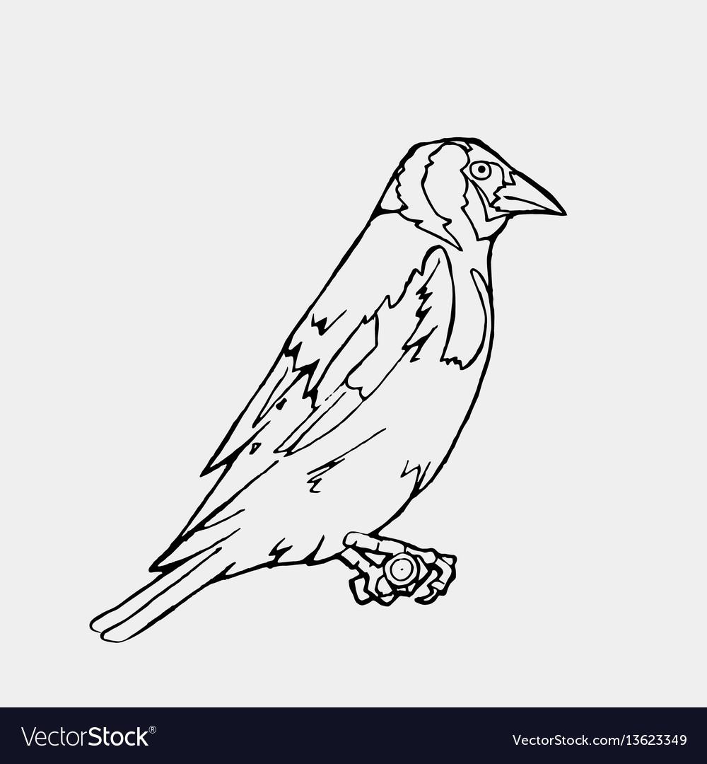 Hand Drawn Pencil Graphics Small Bird Engraving Vector Image