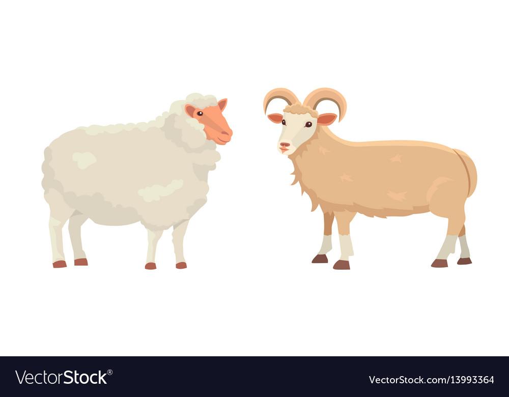 Set cute sheep and ram isolated retro