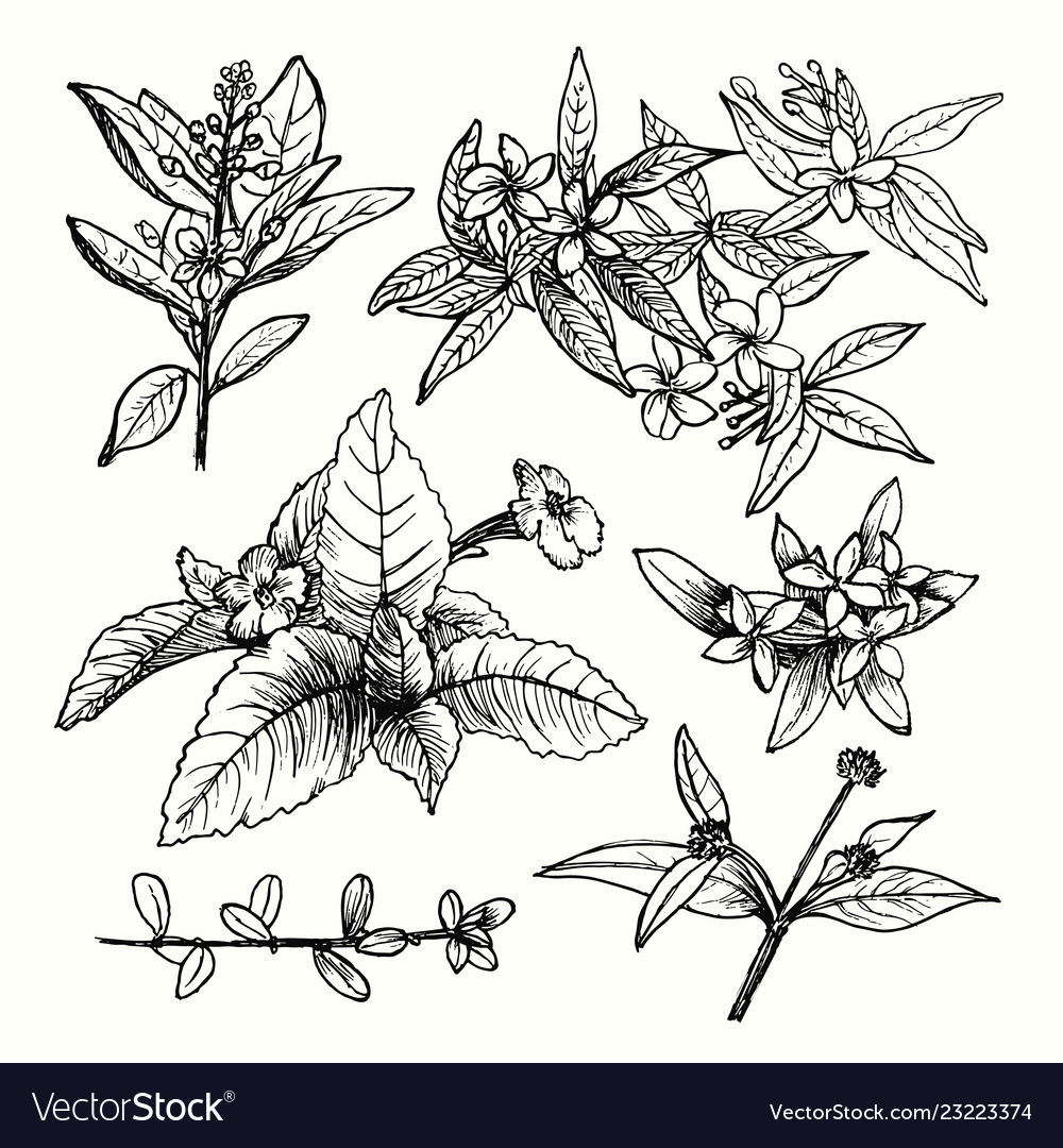 Drawing plants set