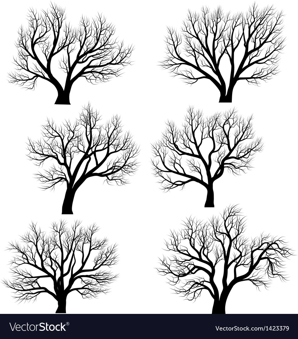 Silhouettes of trees without leaves