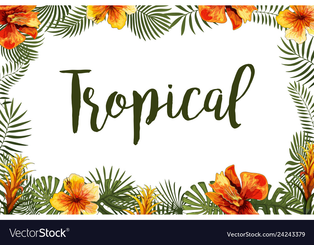 Summer tropical exotic leaves and branches