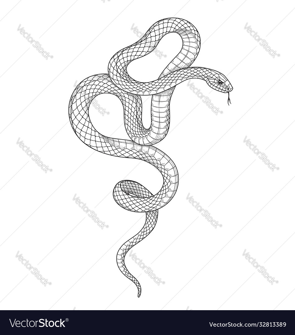Hand drawn monochrome snake