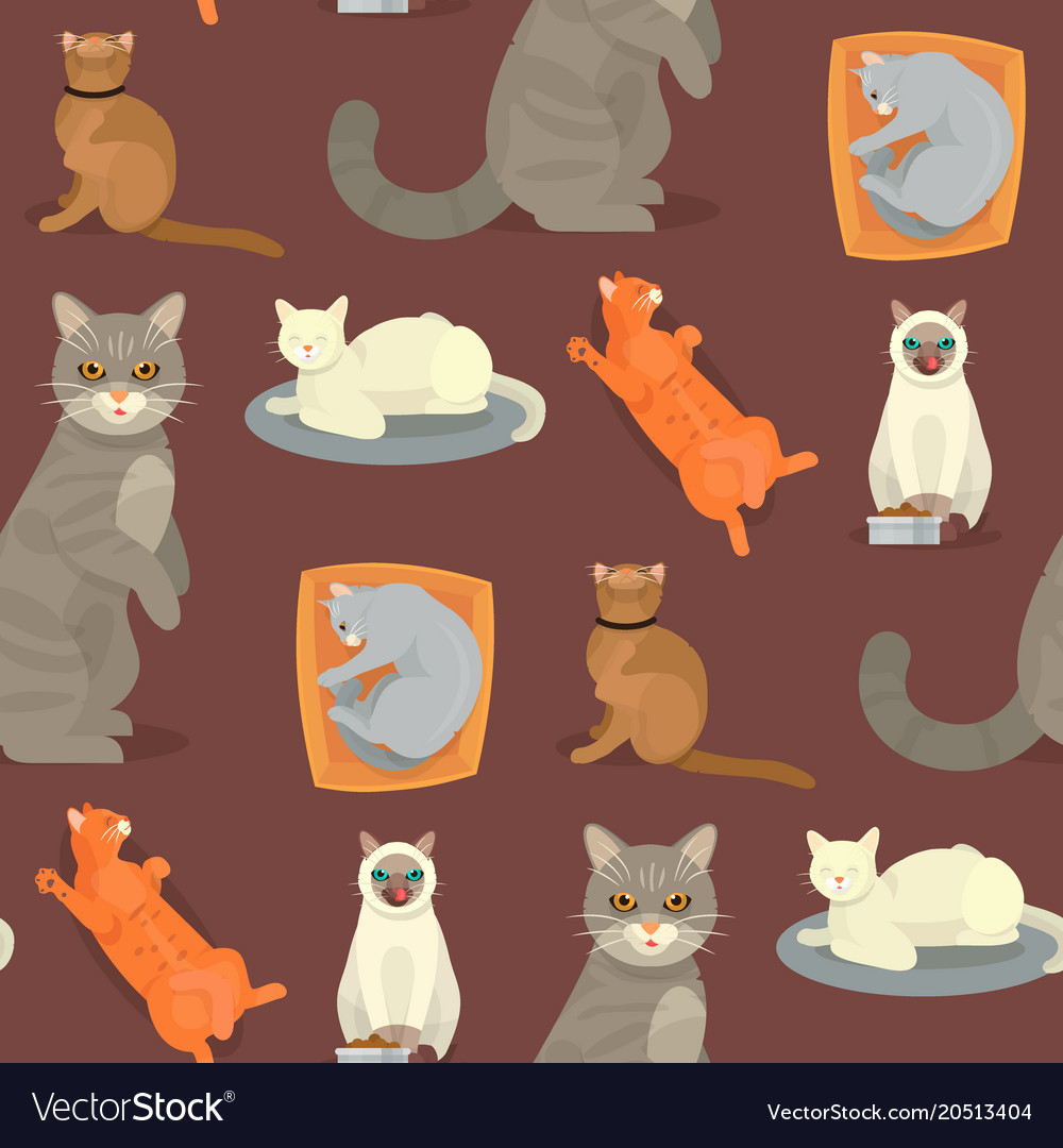 Cat breeds cute kitty pet cartoon cute animal