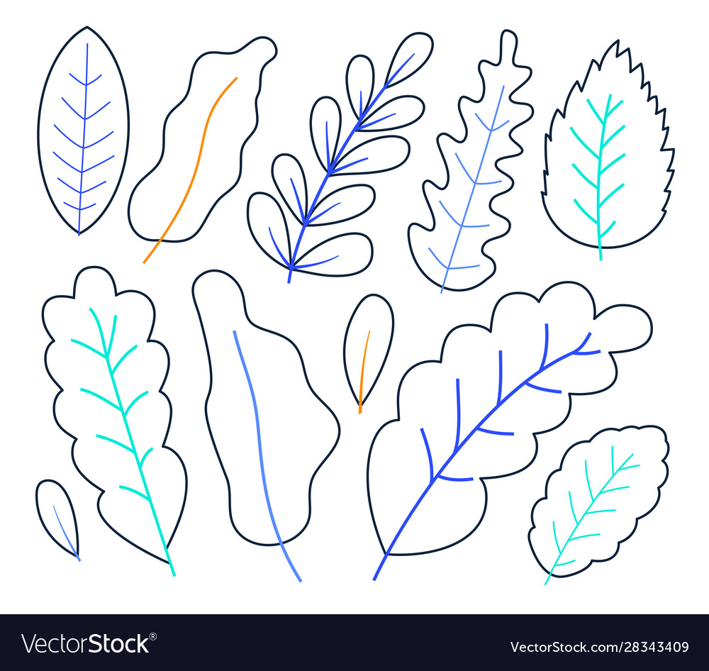 Set hand drawn plant leaves in outline style