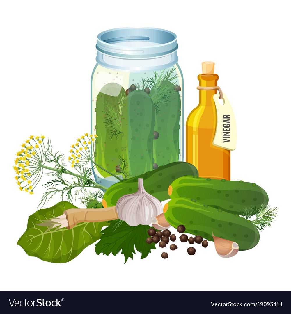 Jar with cucumbers and ingredients for pickles vector image