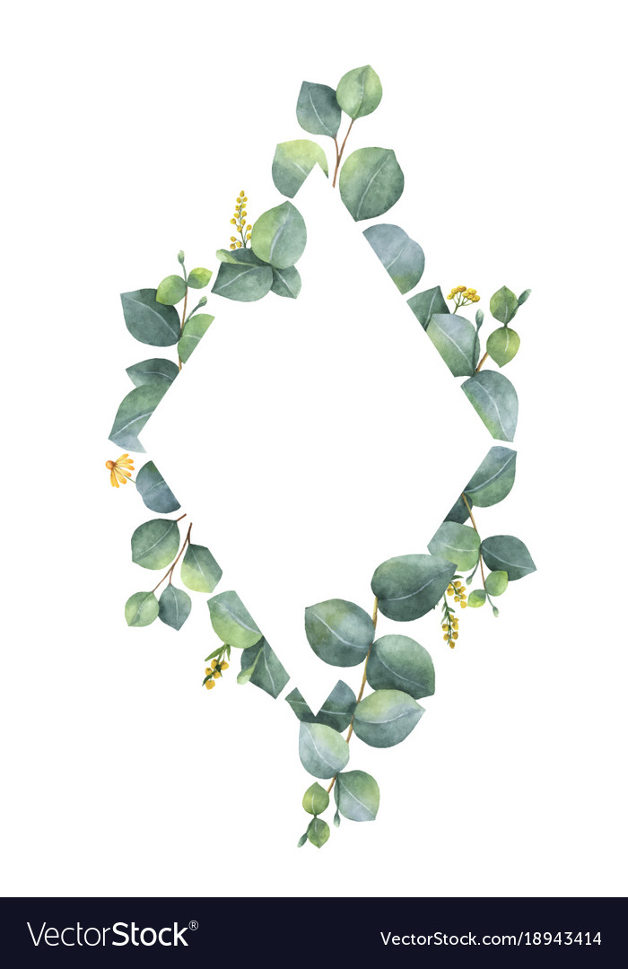 Watercolor frame with green eucalyptus vector image