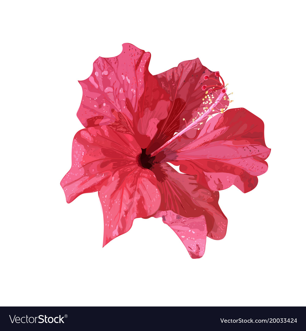 Isolated Red Hibiscus Tropical Plant Hand Drawn Vector Image