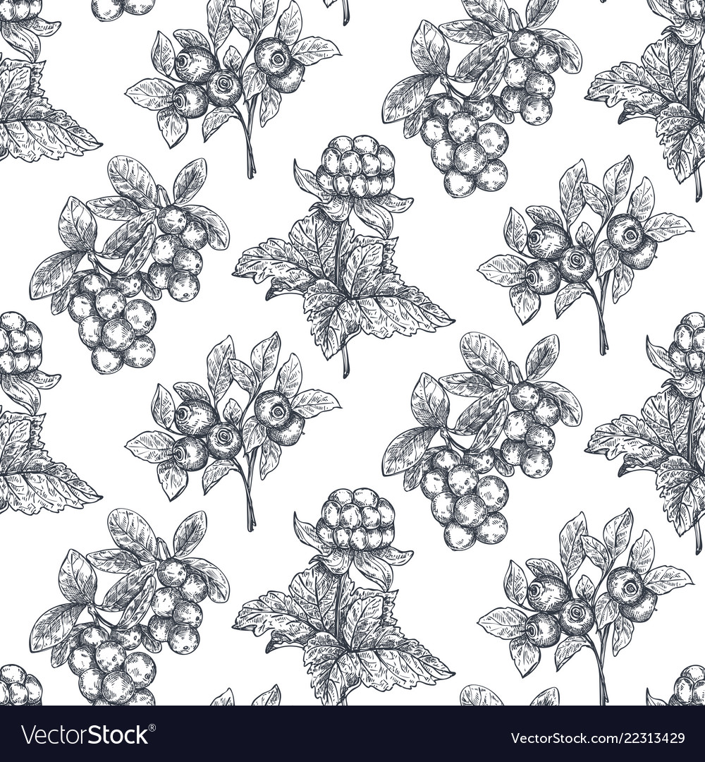 Seamless pattern with hand drawn berries in