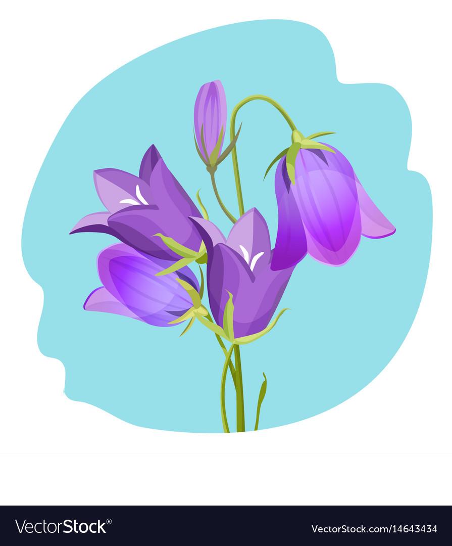 Viola violet flowering plant realistic vector image