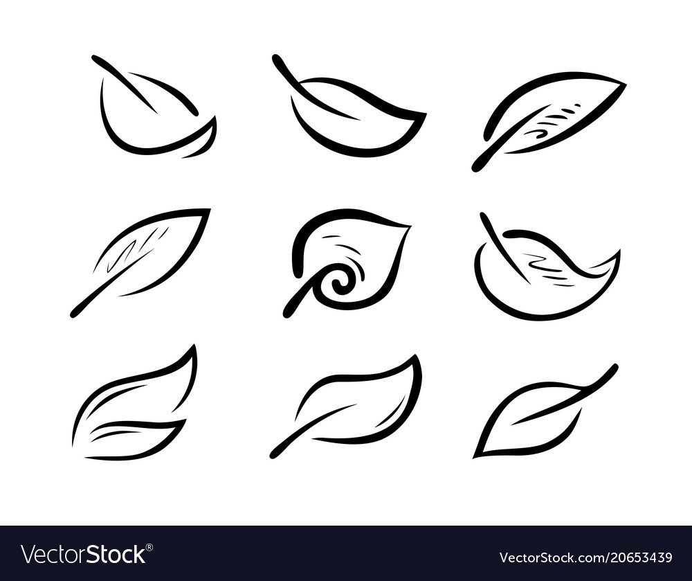 Set of stylized leaves nature ecology logo or