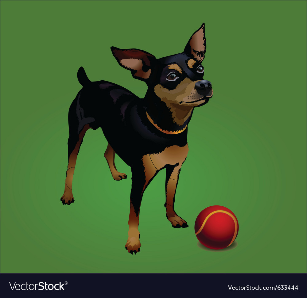 Small dog with red ball
