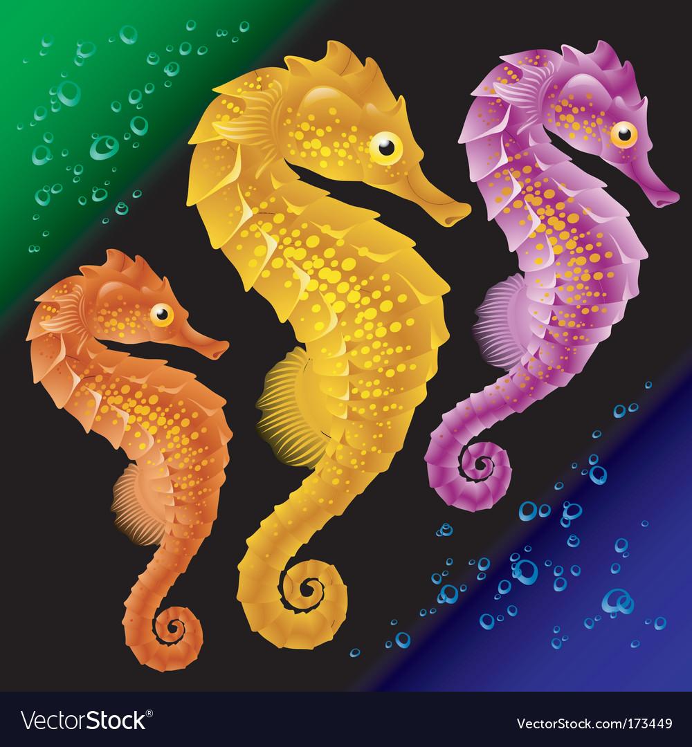 seahorses royalty free vector image vectorstock