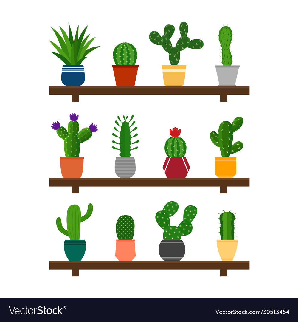 Collection cactuses in pots on shelf