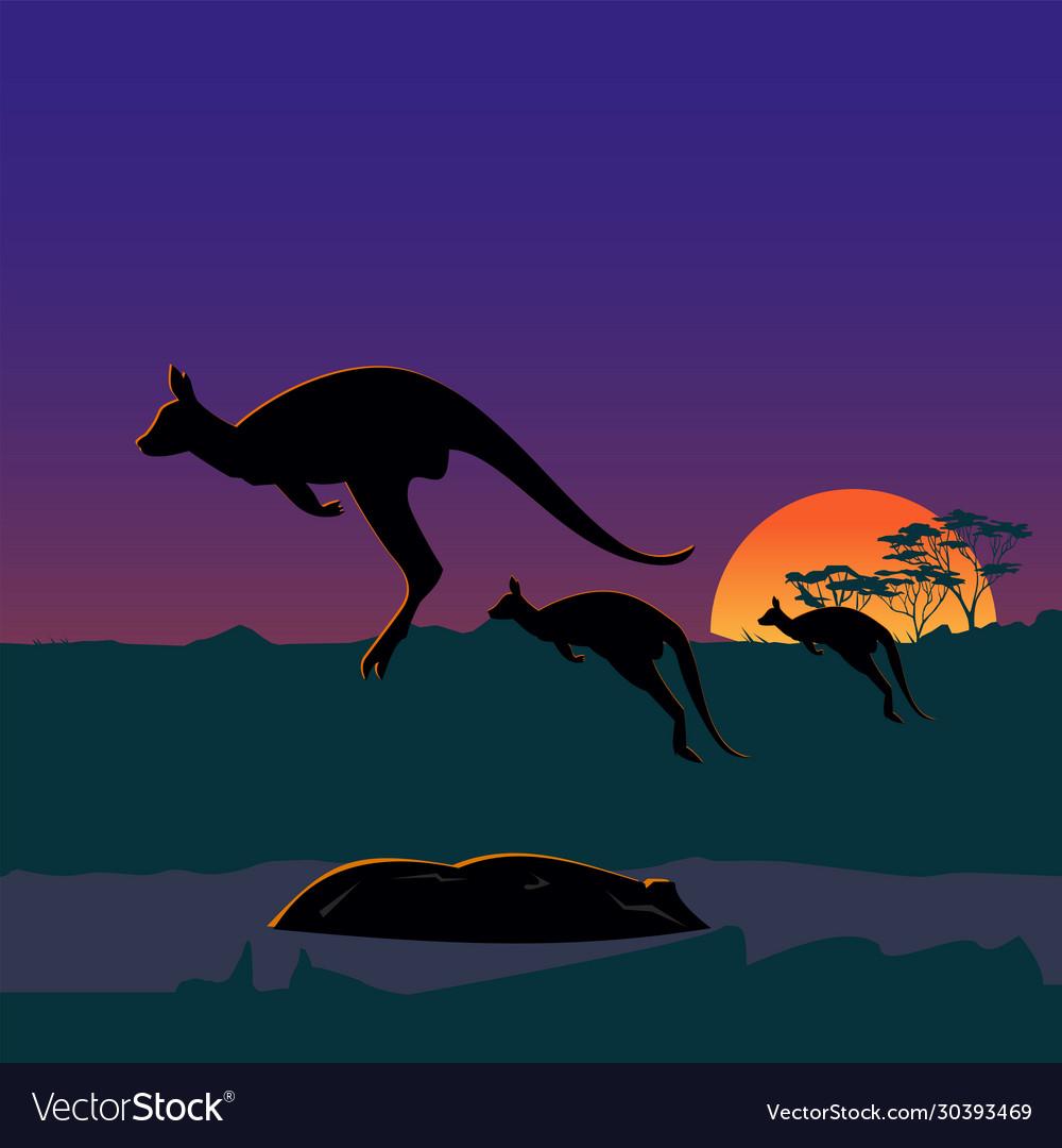 Three large kangaroos on australian plains