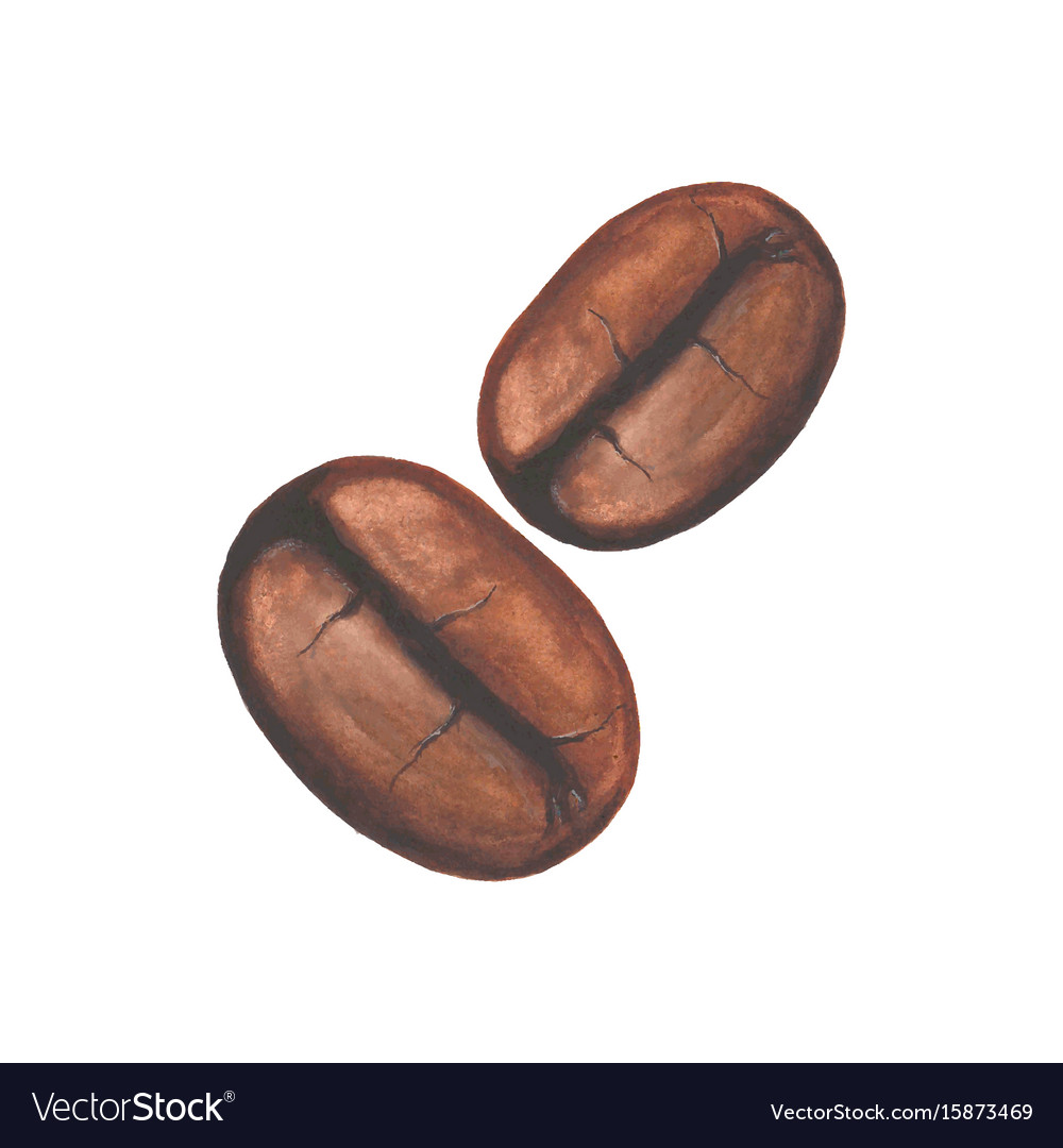 Watercolor coffee beans isolated on a white vector image