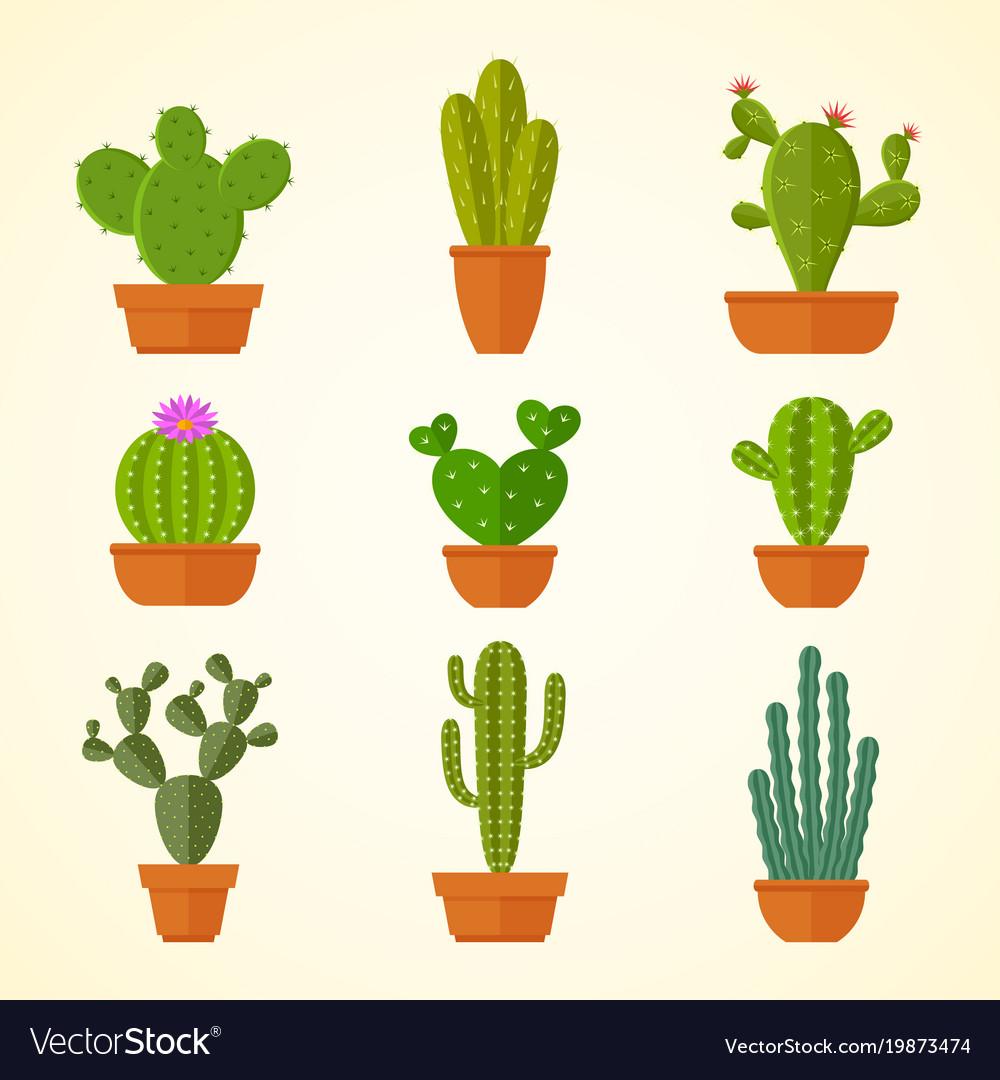 Cactus decorative home plant in pots flat