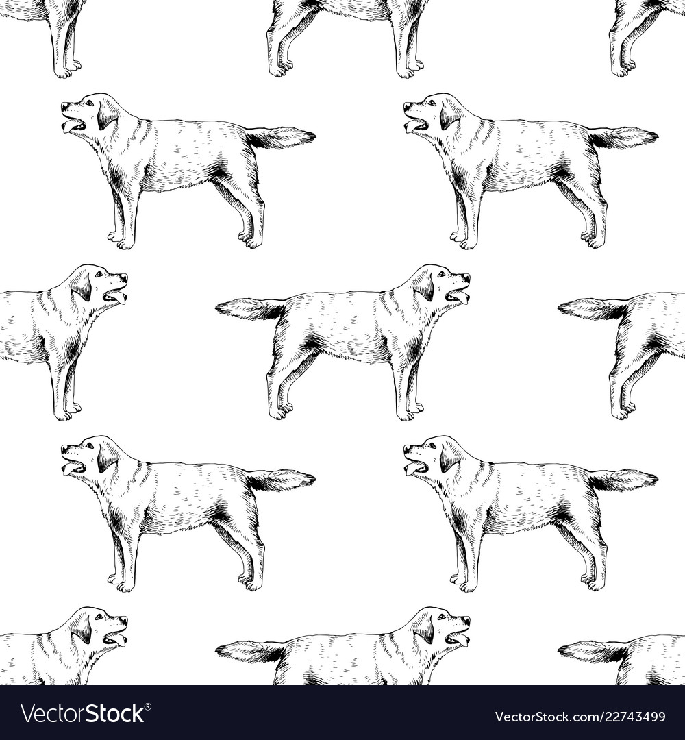 Seamless pattern with hand drawn labrador