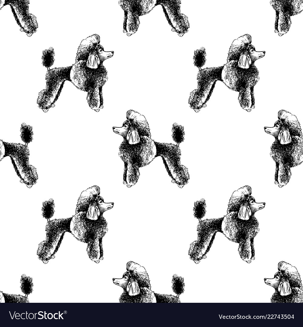 Seamless pattern with hand drawn poodles