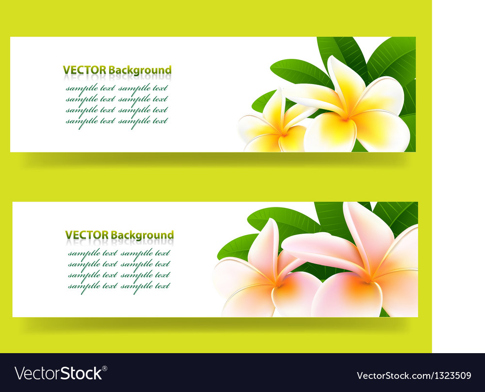 Bannner with frangipani floral background