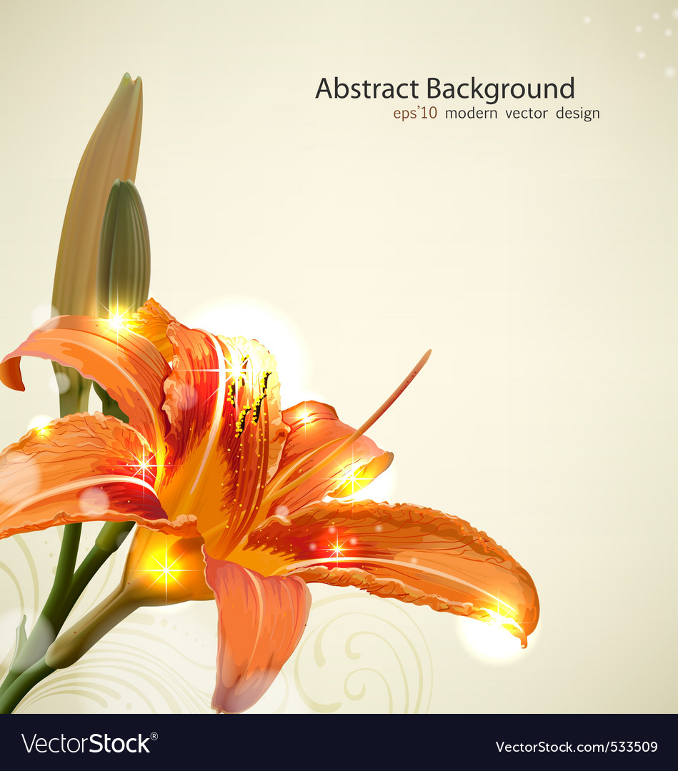 Lily Flower Background Royalty Free Vector Image