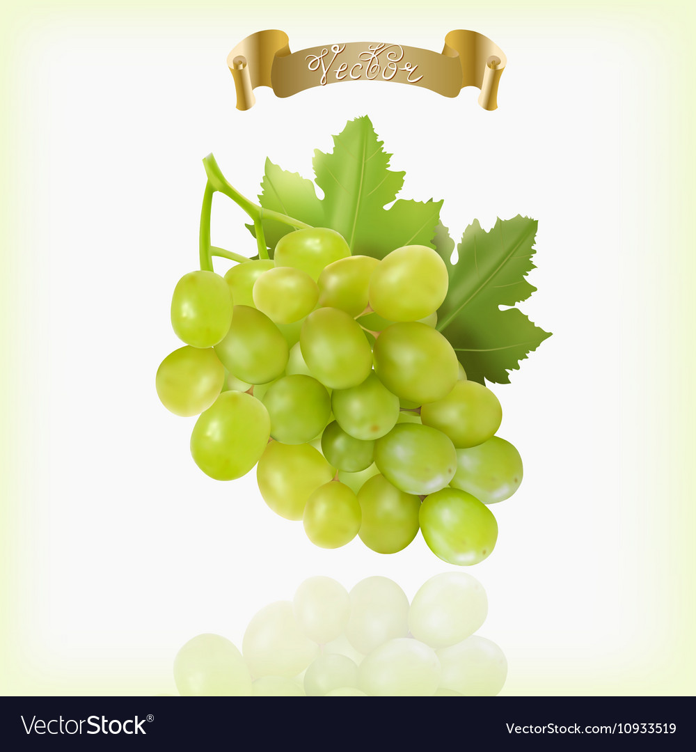 Bunch of yellow or green grapes with vine leaves