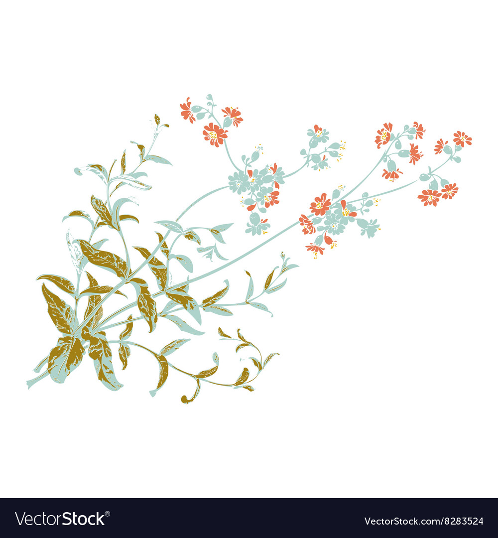 Botanical branches with flowers isolated herbal