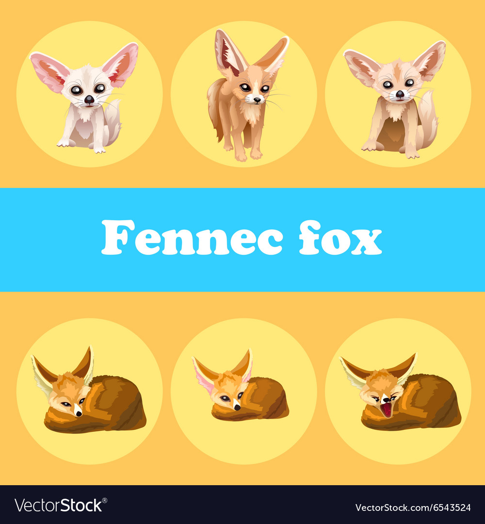 Cute set fennec fox on a yellow background vector image