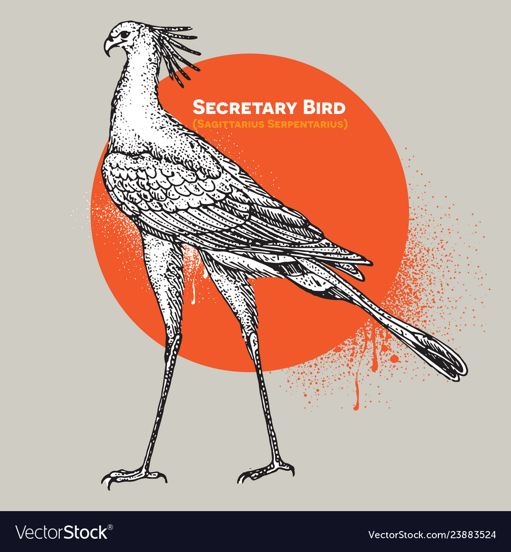 Vintage engraving of a single secretary bird
