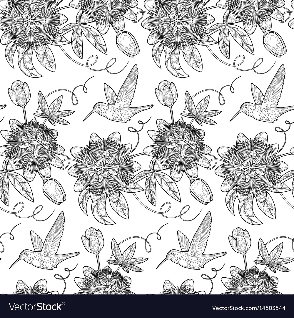 Hummingbird and passiflora seamless pattern vector image