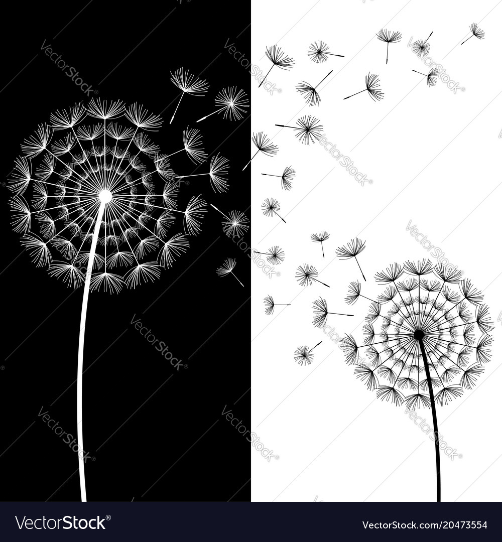 Abstract Wallpaper With Black And White Dandelion Vector Image