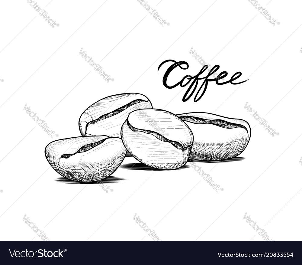 Coffee beans sketch drink coffee banner line art