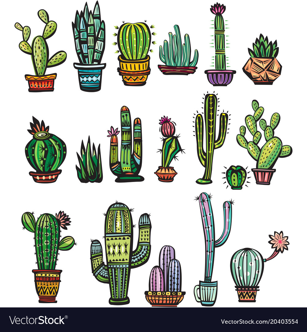 Set of colorful succulents and cactuses