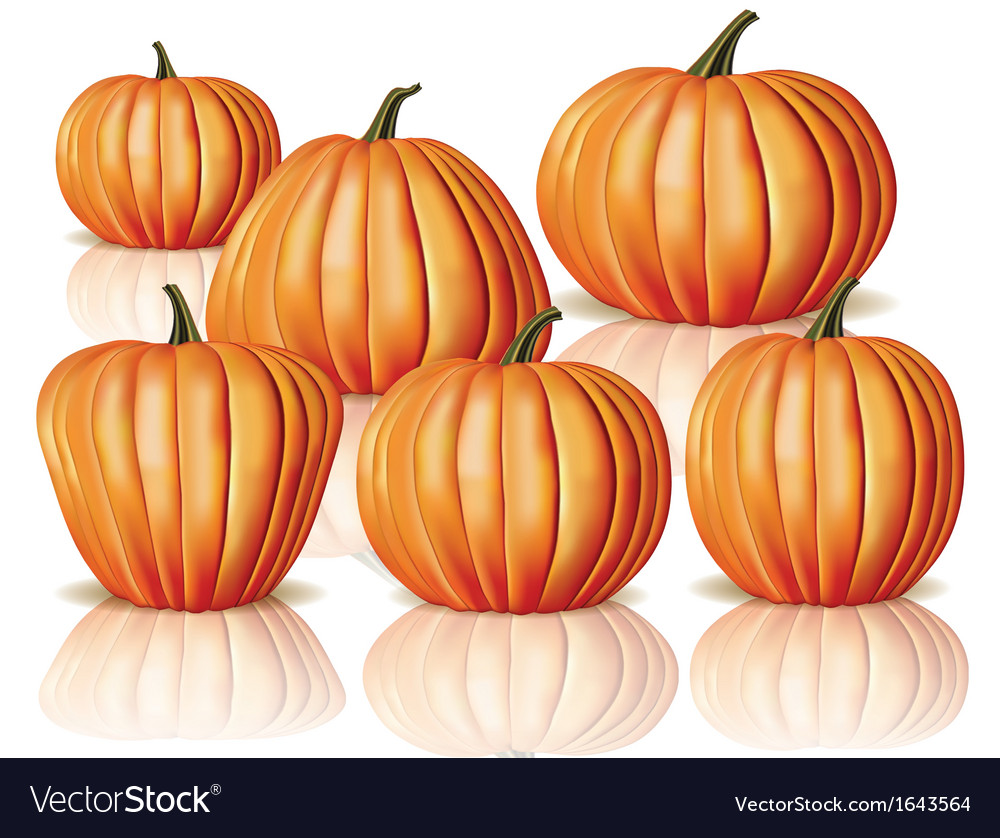 big and small pumpkins royalty free vector image