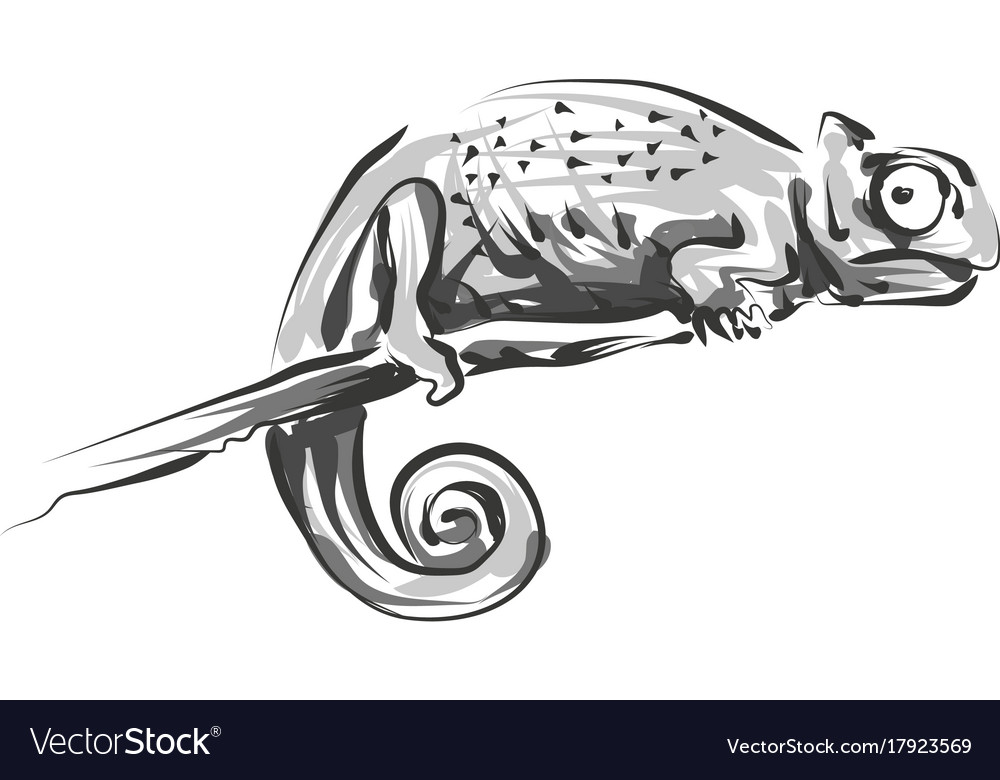 Line sketch chameleon