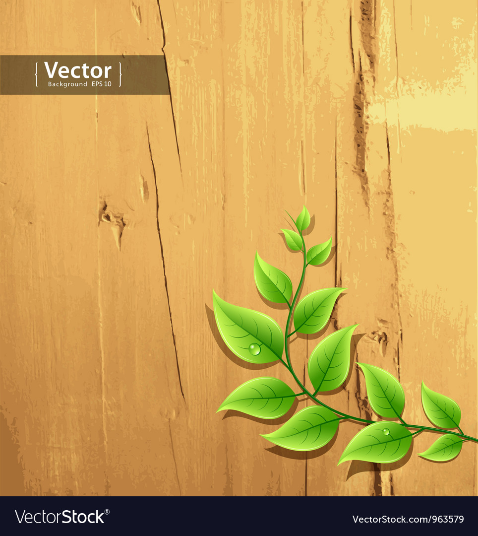 Fresh green leaf on wood background vector image