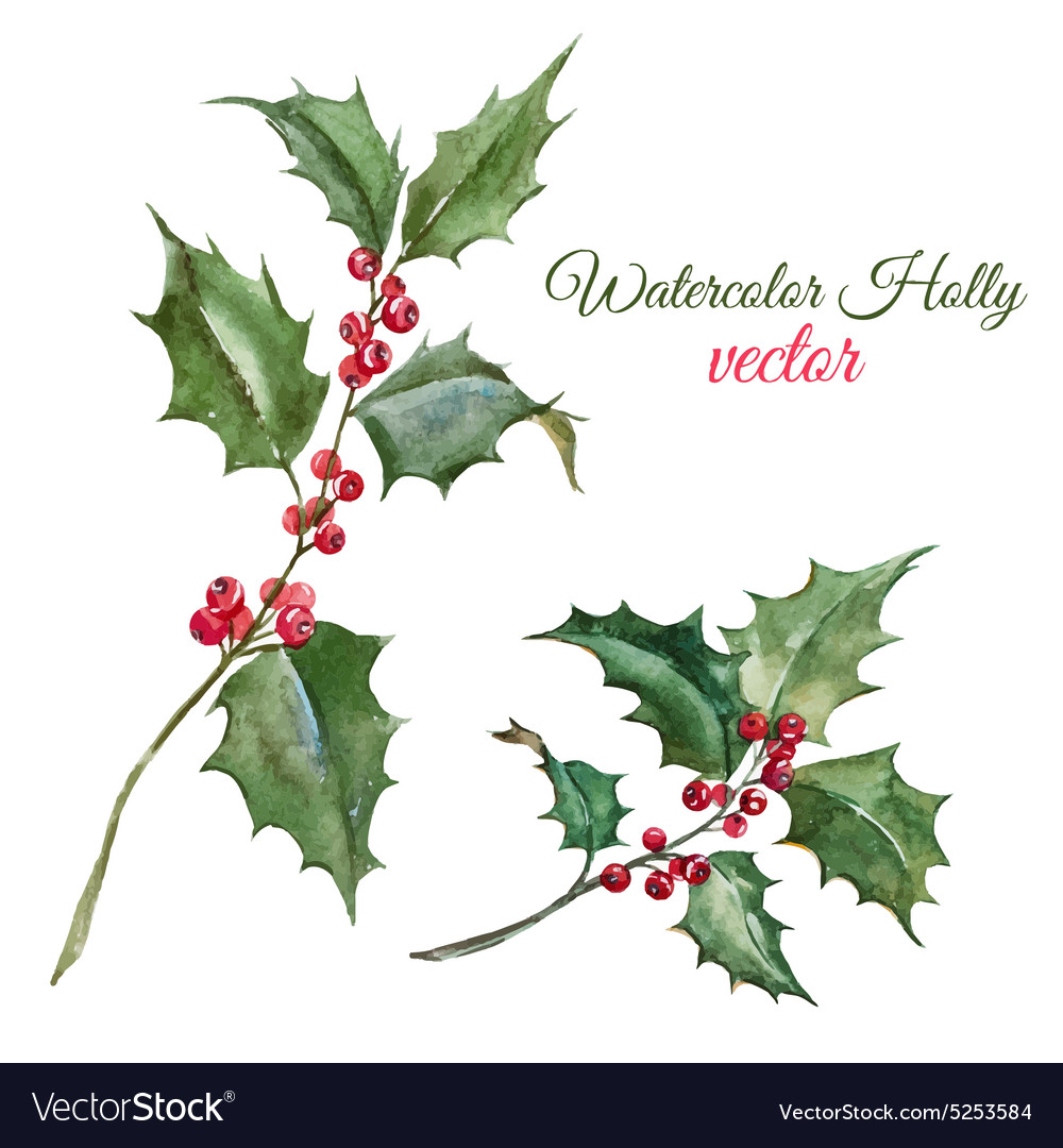 christmas holly flower royalty free vector image