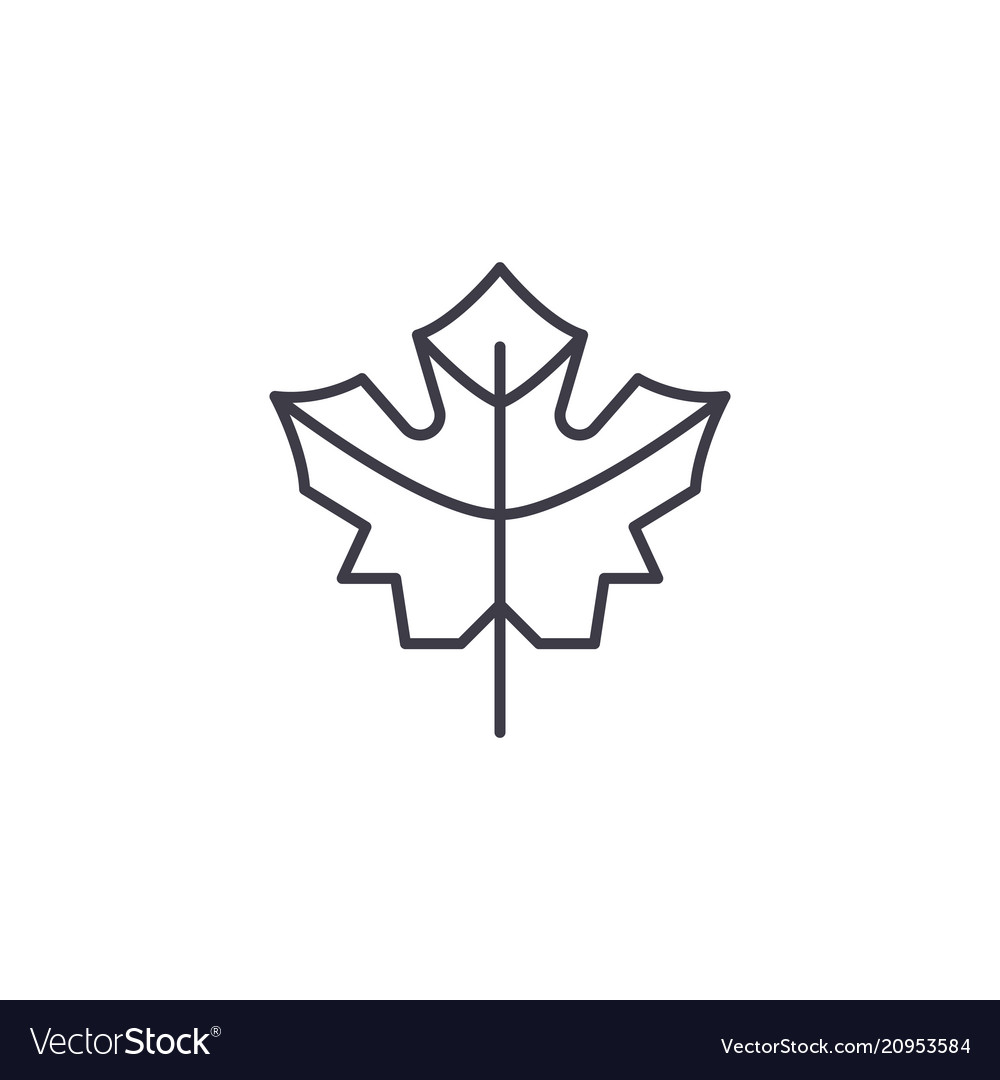 Maple leaf line icon concept maple leaf flat