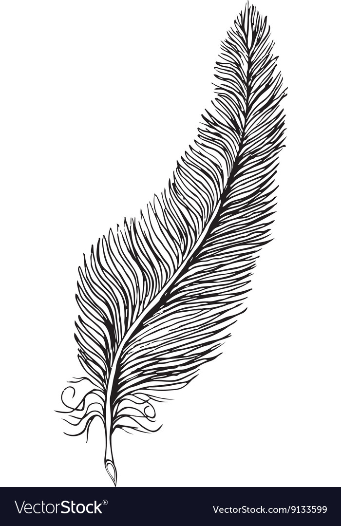 Line drawing feather