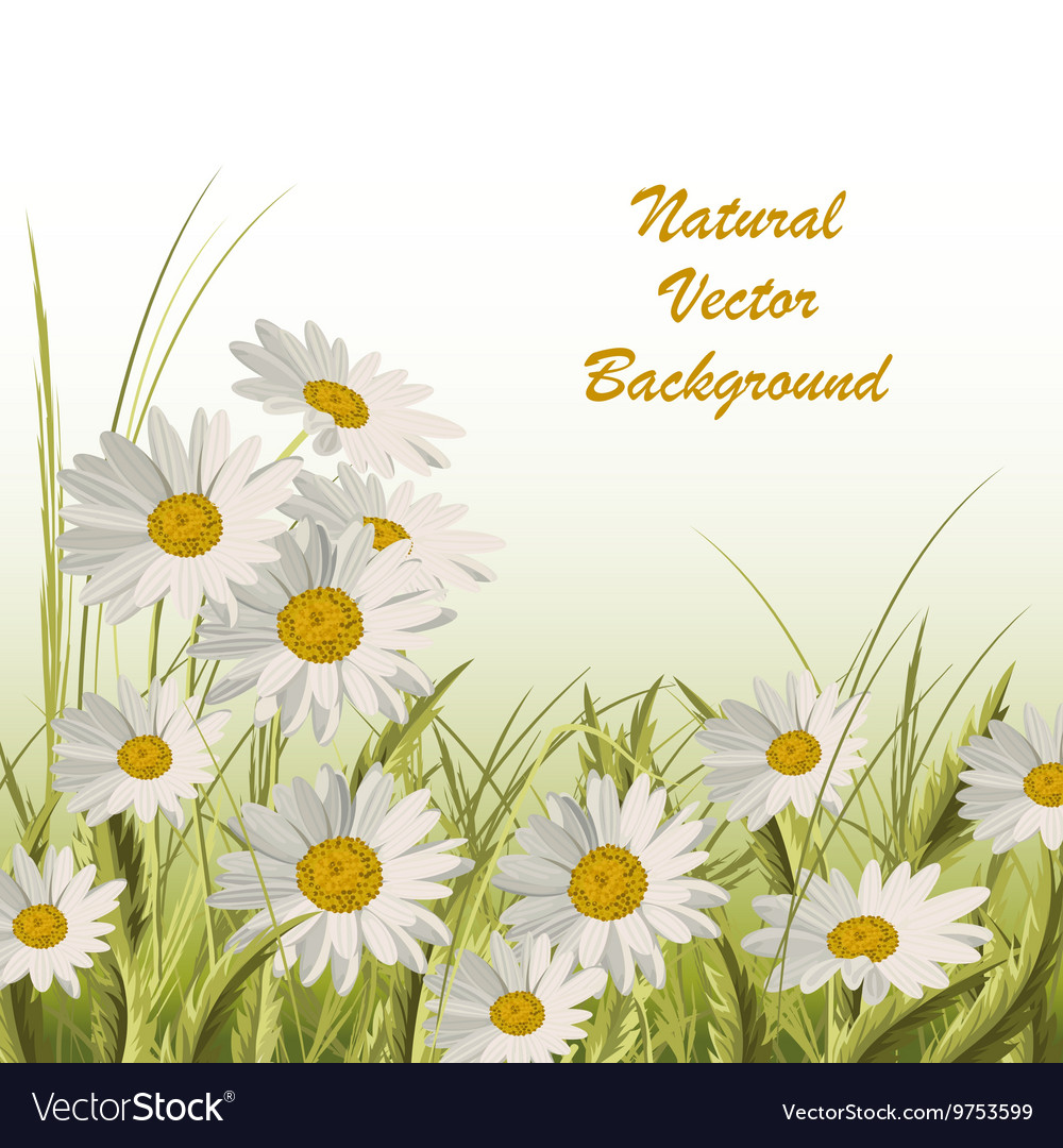 Nature background with green grass and daisies