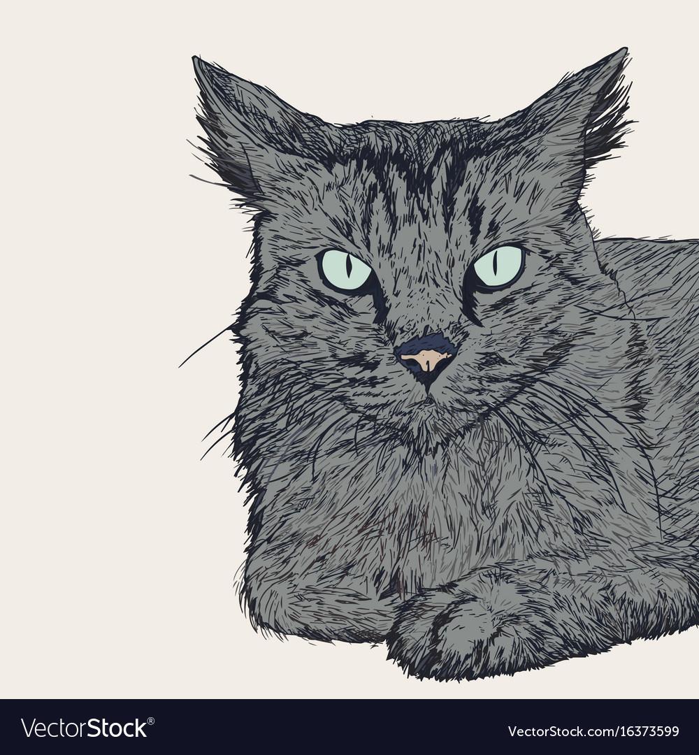 Sitting cat hand draw sketch