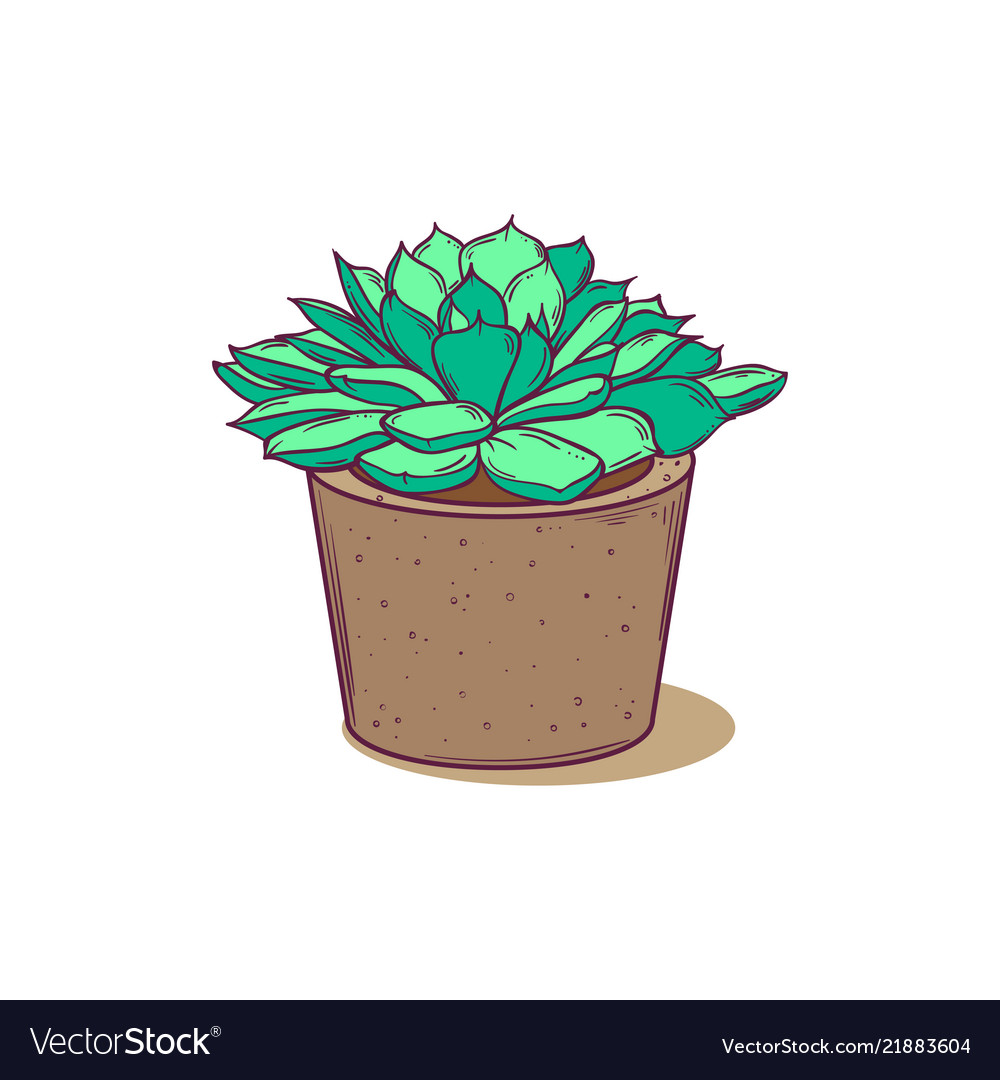 Cute Succulent In Pot For Postcards Tags Web Vector Image